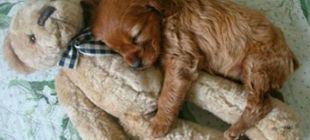 Che stanchezza!